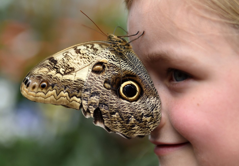 Butterfly Exhibition Photocall at Natural History Museum
