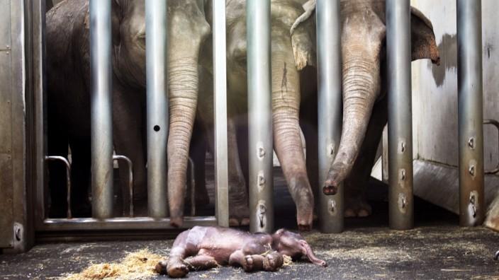 Abschied der Elefanten vom Jungtier