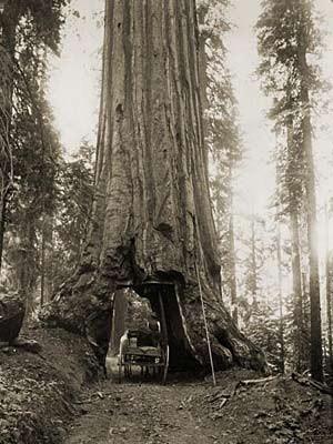 Pauschalreise anno 1893: Yosemite Valley, Leibniz-Institut für Länderkunde e.V.
