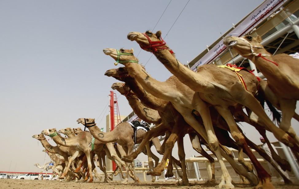 Al Marmoon Heritage Festival Camel Racing