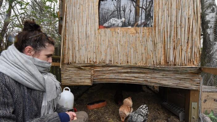 Geflügelhaltung in München: Silke Jenny pürierte anfangs die Essensreste für die Hühner, doch inzwischen speisen die drei Wyandotten etwas weniger luxuriös.