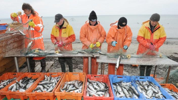 Heringsfischer an der Ostsee
