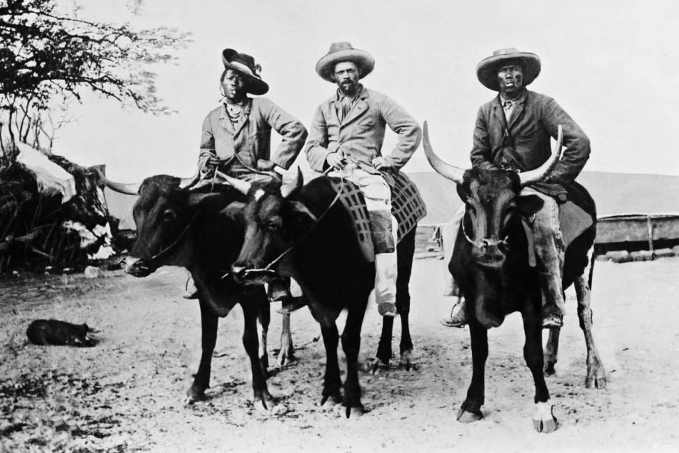 Hereros auf Reitochsen, 1904