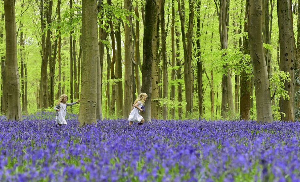 Local youngsters Bella and Daisy run through a forest covered in bluebells near Marlborough in southern England