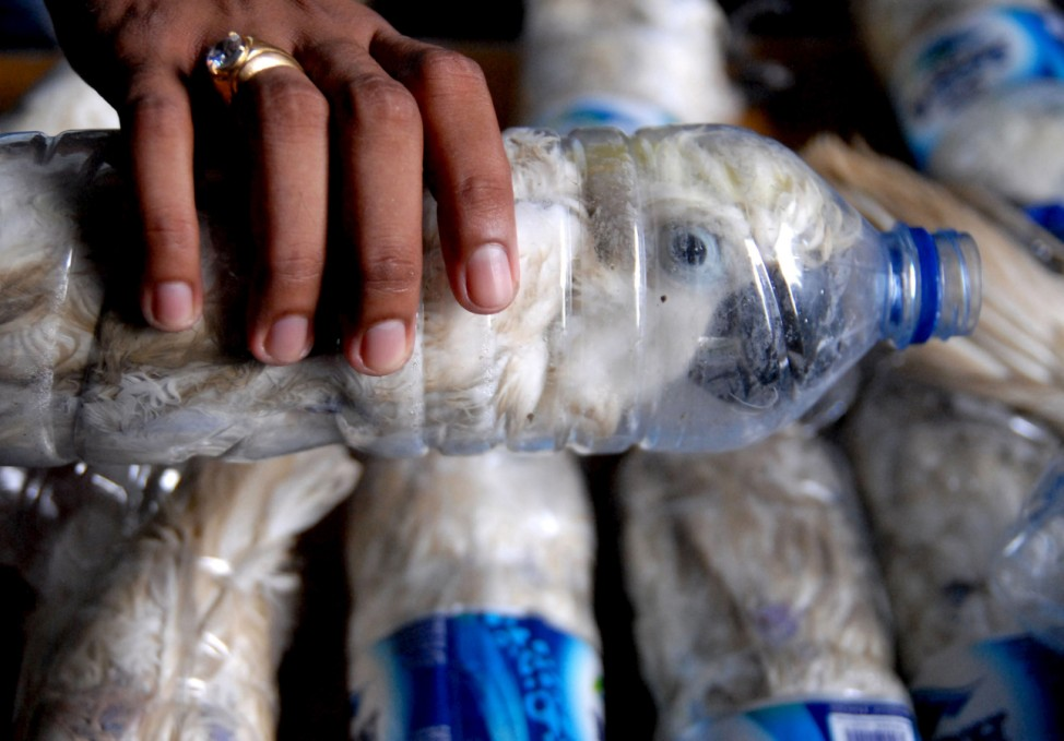 A policeman holds a water bottle with a yellow-crested cockatoo put inside for illegal trade, at the customs office of Tanjung Perak port in Surabaya