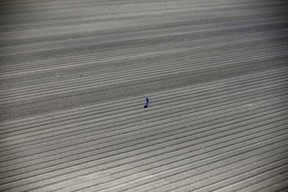 A worker walks through farm fields in Los Banos