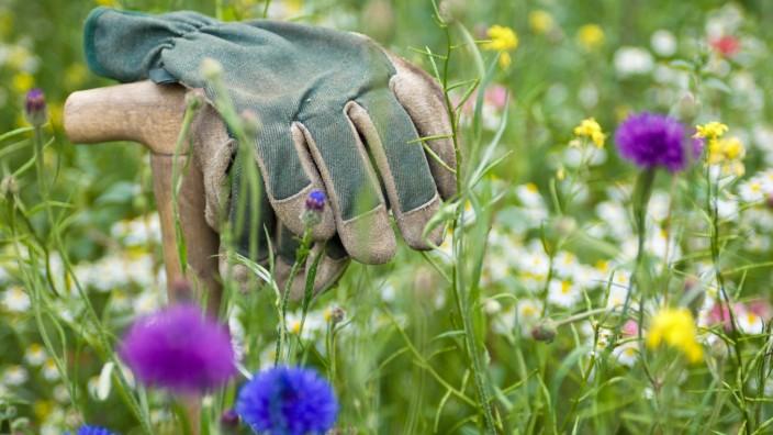 Garten: Bei dieser Wiese können Handschuhe, Laubbläser und Gartenschere ruhen.