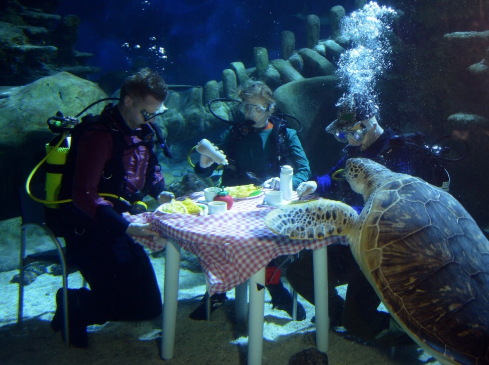 London Aquarium Divers Eat Underwater Fish Supper