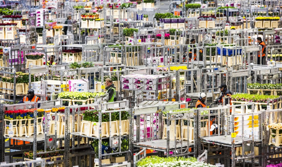 Flower auction FloraHolland in Aalsmeer