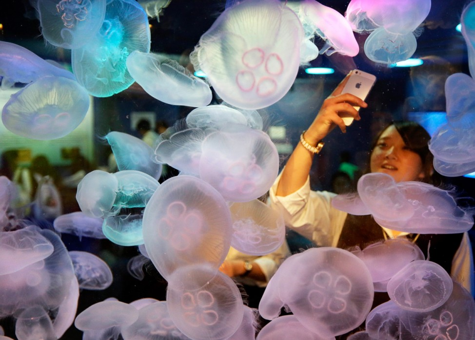 Jellyfishes attracts visitors