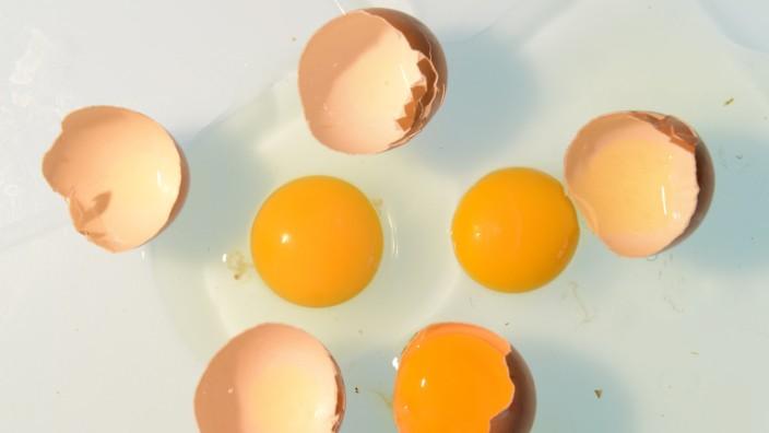 Eier verursachten Salmonellen-Ausbruch