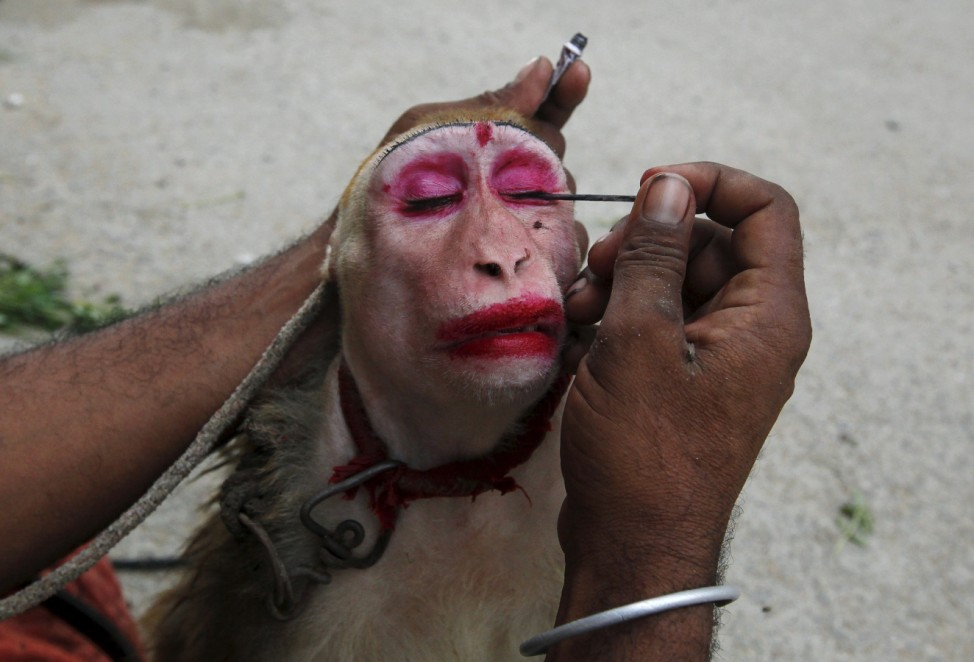 A man applies eye make up to his pet monkey before it performs tricks for money in Karachi, Pakistan