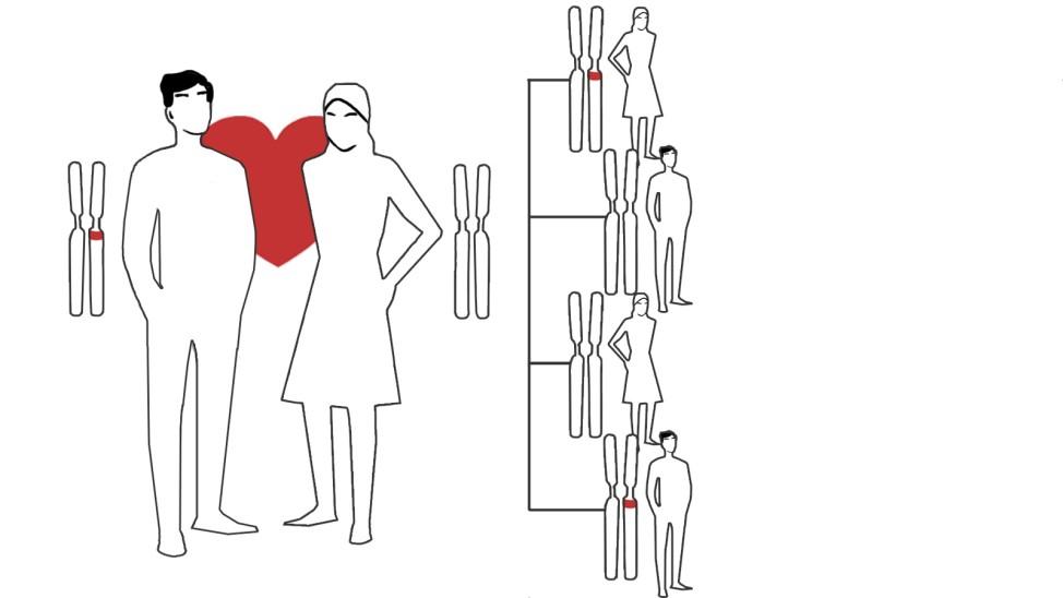 Gene und Gebärden - Erbgang