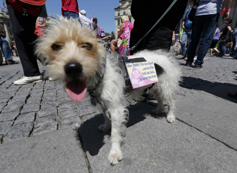 A dog and its owner take part in a protest rally prior to the G7 summit in Munich