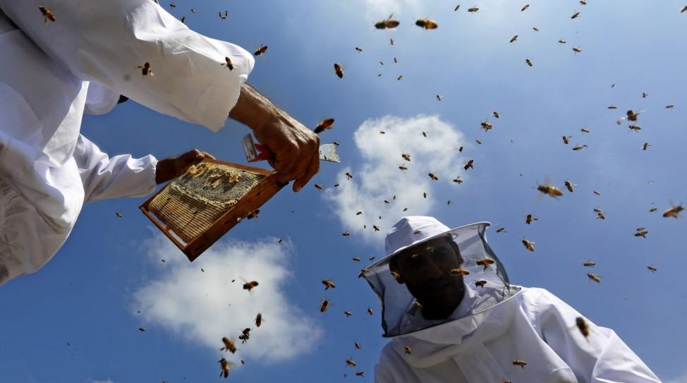 Honey bee farmers at work in Jenin
