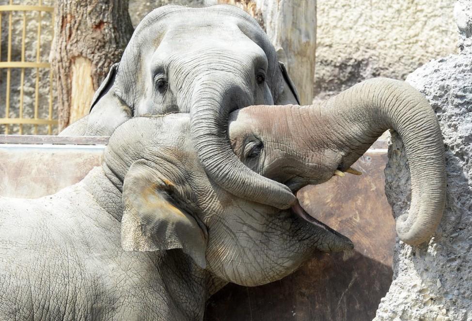 Elephants in Zuerich
