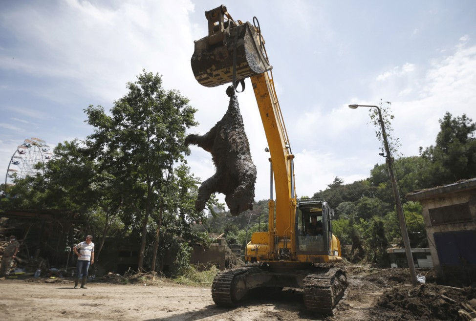 Excavator removes a dead bear at the zoo in Tbilisi