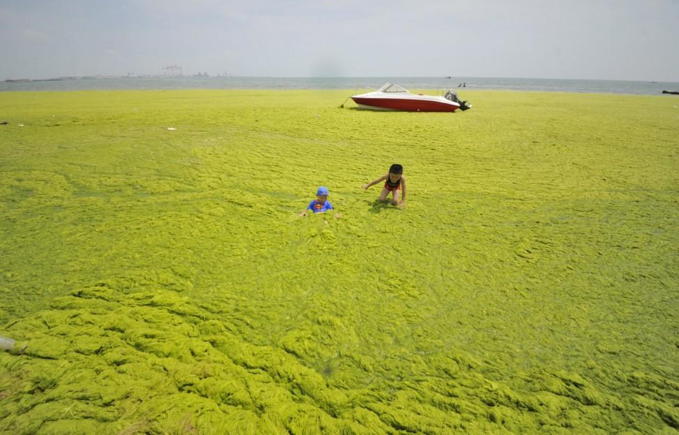Children play at an algae-covered beach in Haiyang