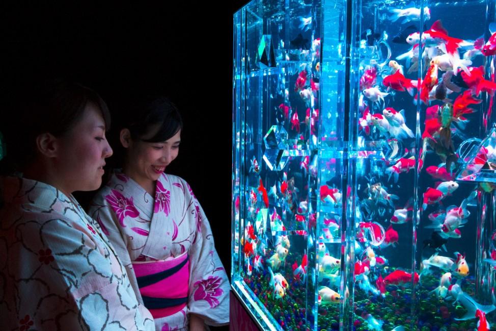 Women wearing kimonos look at goldfish through the warped wall of fish tank at Art Aquarium exhibition in Tokyo