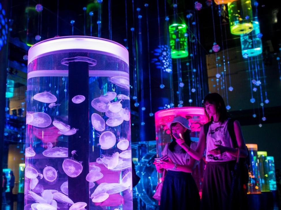 *** BESTPIX *** Neons And Jellyfish Attract Tokyoites To High-tech Aquarium