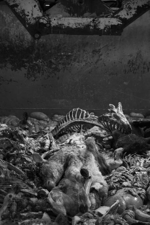 Tote Tiere