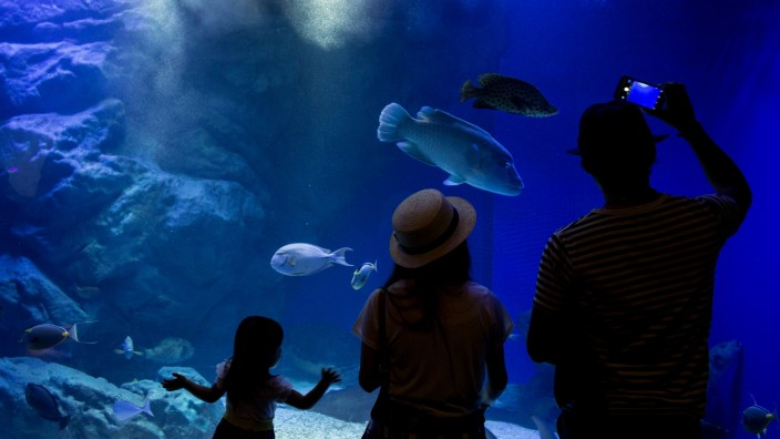 Neons And Jellyfish Attract Tokyoites To High-tech Aquarium