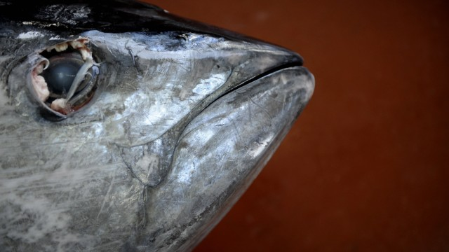 ENVIRONMENT-EU-FISH-SPECIES-TUNA-REGULATE-MOROCCO