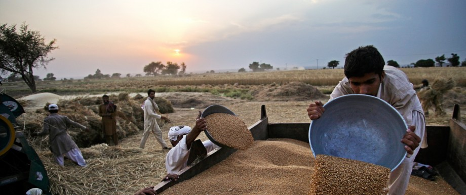 Images Of Wheat From Harvest To Flour Mill As Pakistan Wheat Output Is Expected To Increase