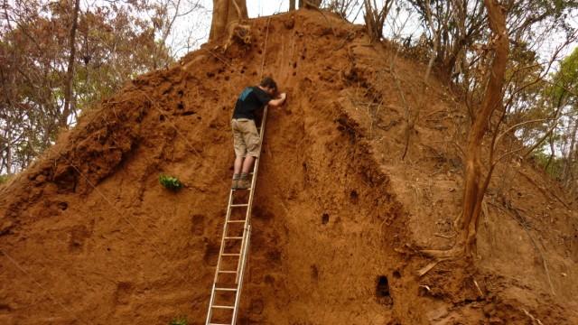 Ältester Termitenbau der Welt: Der untersuchte Termitenbau in der Demokratischen Republik Kongo ist rund sechs Meter hoch
