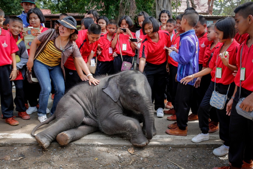 World Elephant Day 2015