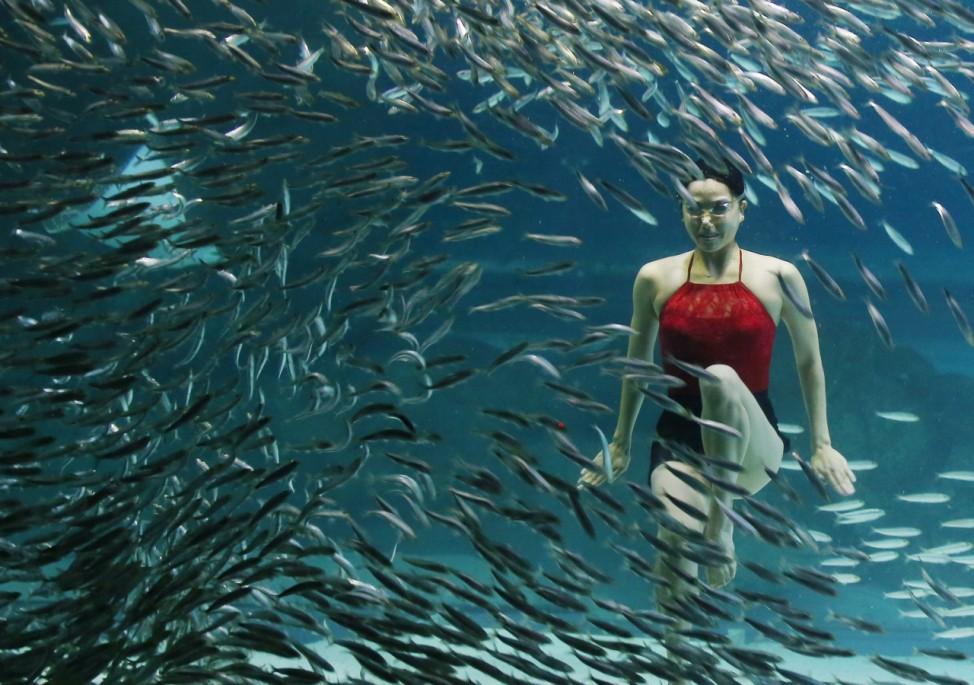 Underwater performance with school of sardines