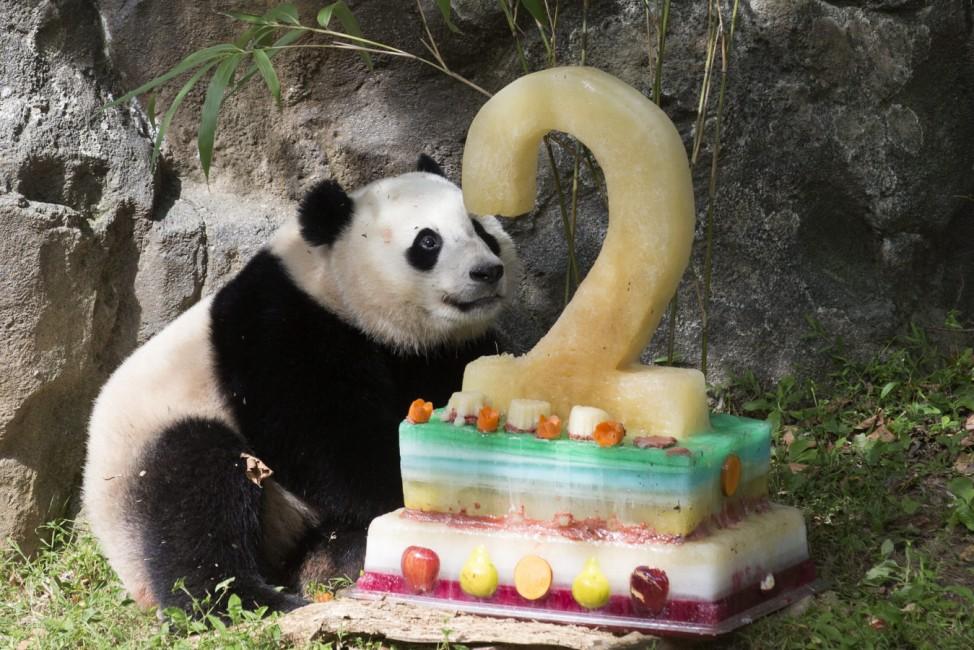 Giant panda cub Bao Bao's second birthday at Smithsonian's Nation