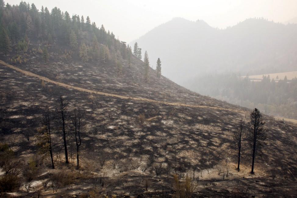 A hillside burned by the Okanogan Complex fire is pictured near Tonasket, Washington
