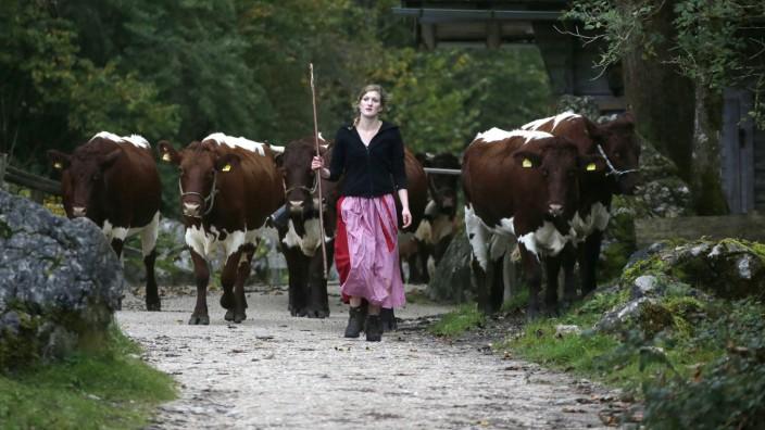 Geklonte Tiere: In Europa gibt es landwirtschaftliche Traditionen, Klonen gehört nicht dazu: Eine bayerische Bäuerin treibt ihr Vieh von der Sommerweide ins Tal.