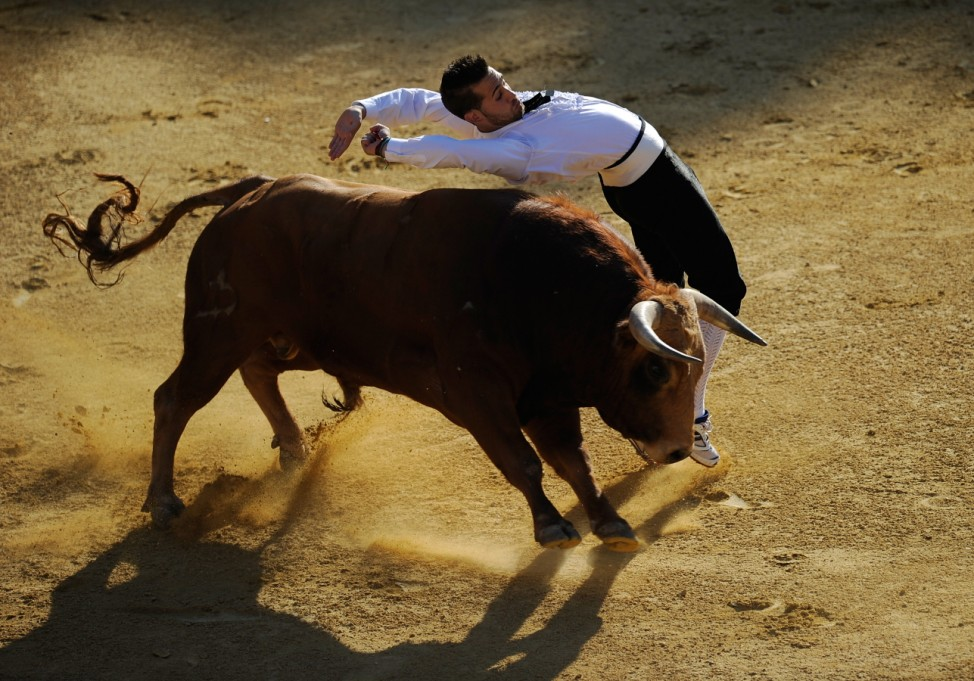 French Bull Jumpers perform at the Liga de Corte Puro final in Valladolid