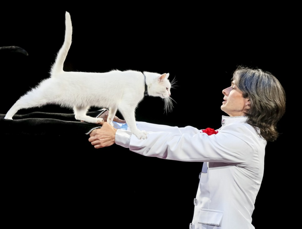 A cat and its trainers perform during 'The Circus Princess', a new programme, at the National Circus in Kiev