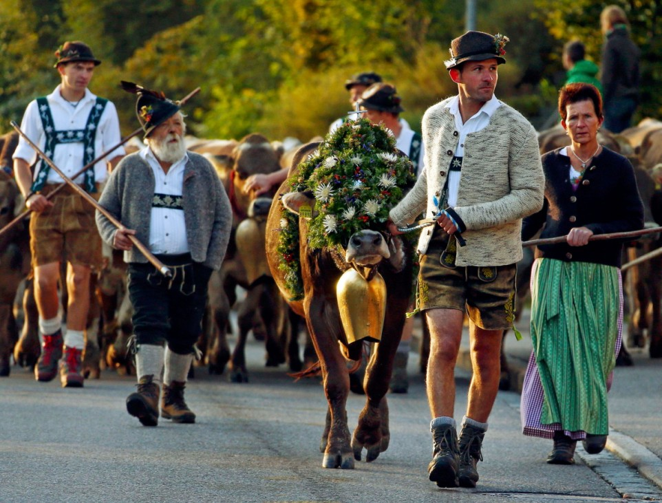Bavarian farmers escort cows during the traditional 'Almabtrieb' in Oberstaufen