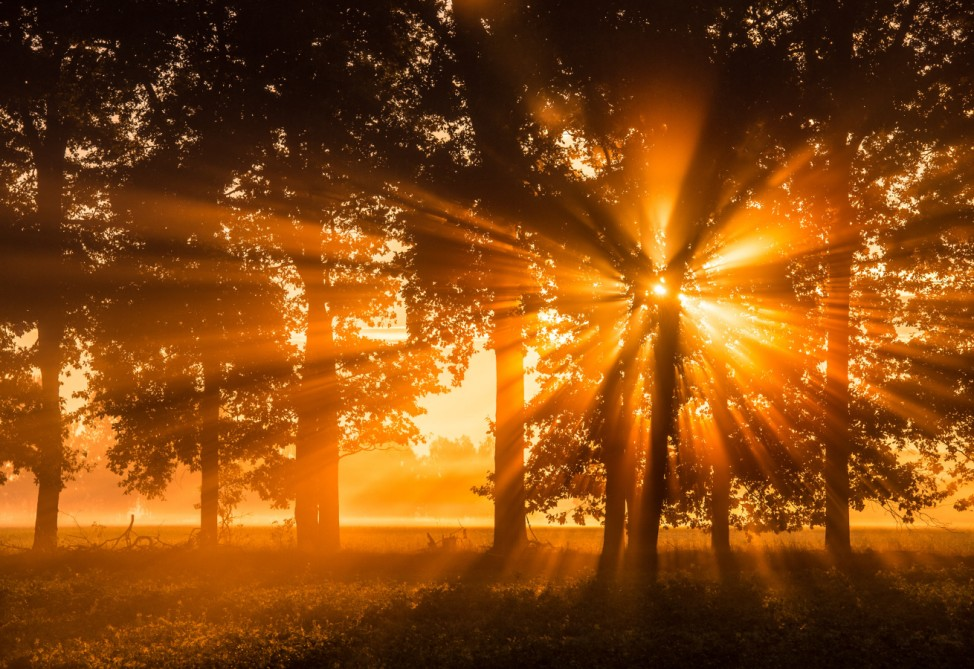Goldener Herbstmorgen