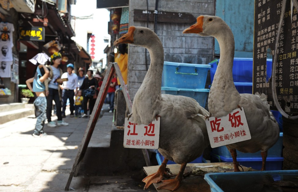 Gooses carrying advertisement boards stand in front of a restaurant as a way to attract tourists in Fenghuang county