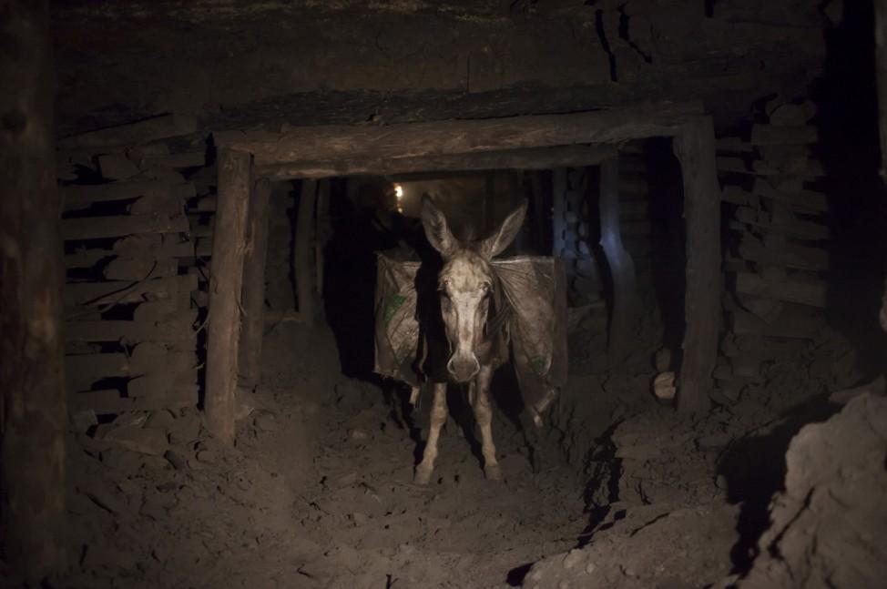 A donkey carrying sacks of coal walks through the narrow tunnels of a coal mine, in Choa Saidan Shah in Punjab province