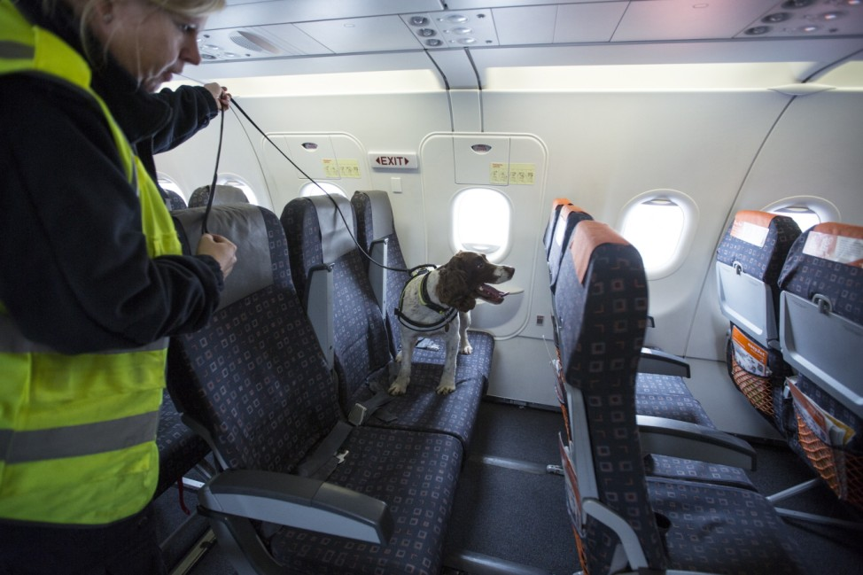 Border Force Dogs In Operation At Gatwick Airport