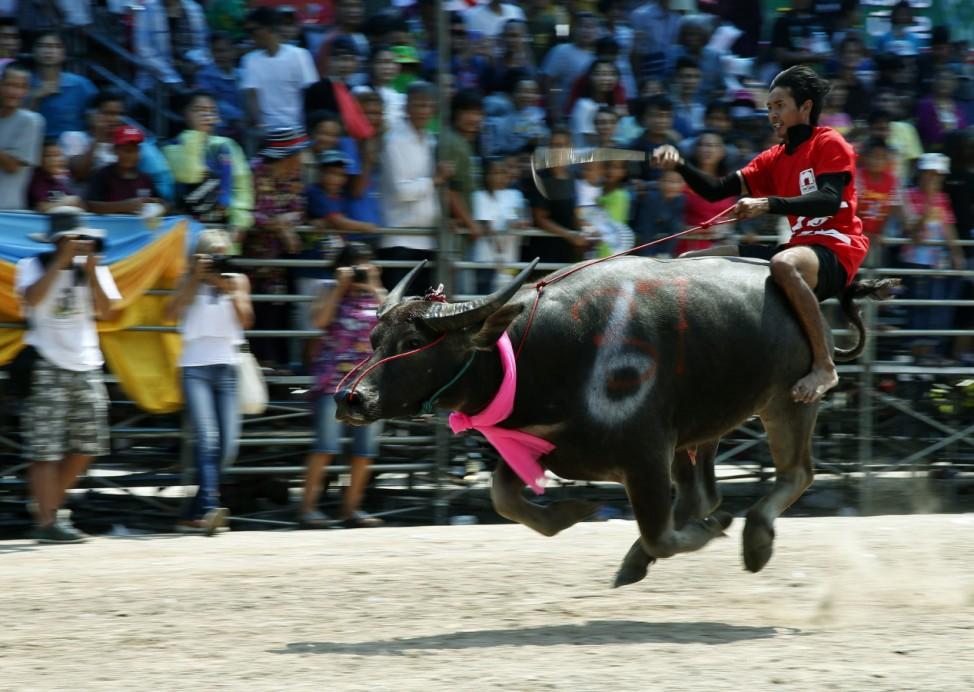 Water Buffalo Race Festival