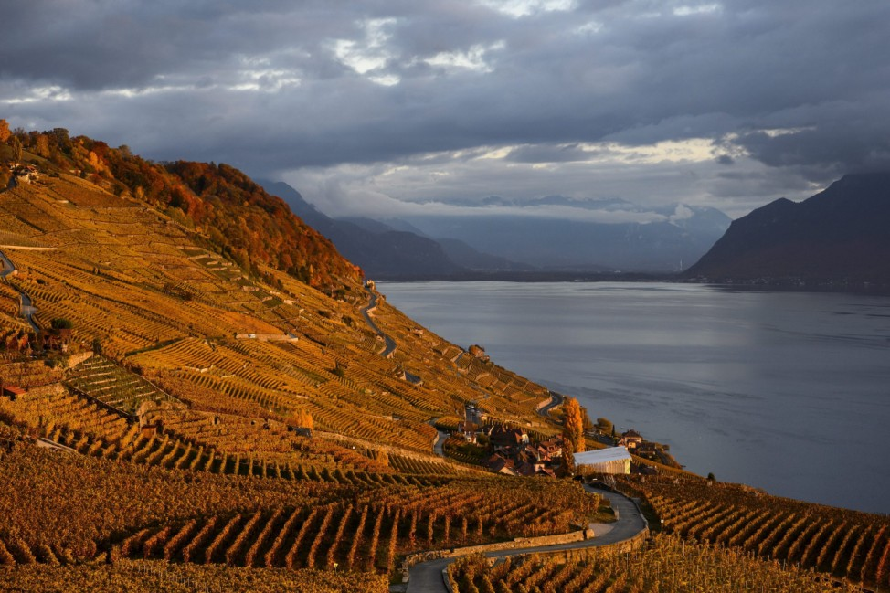 The Lavaux vineyards above the lake Geneva