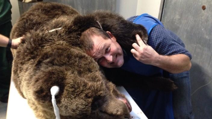 Arzt für Raubtiere: Mein Freund, der Bär: Tierarzt Peter Stelzer hat oft außergewöhnliche Patienten.