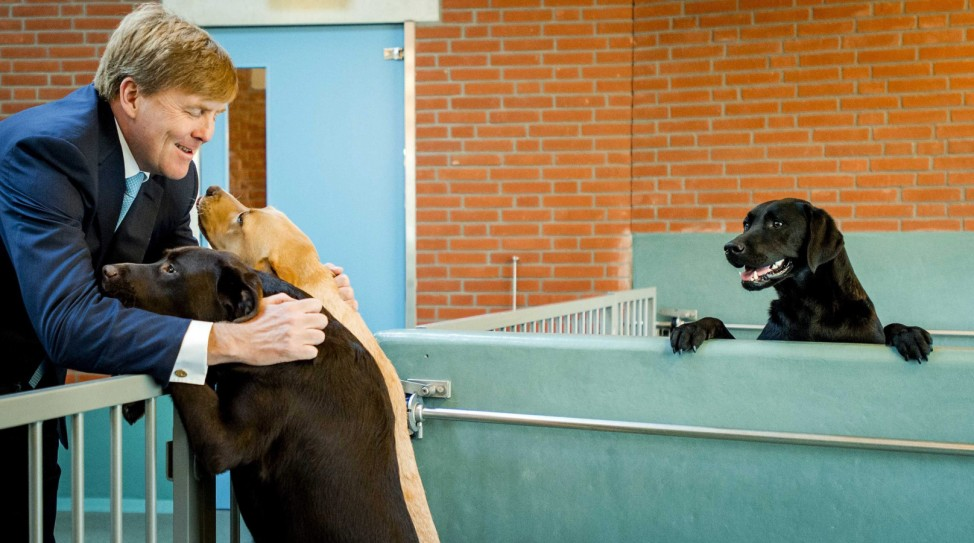 Dutch King attends opening of guide dog experience