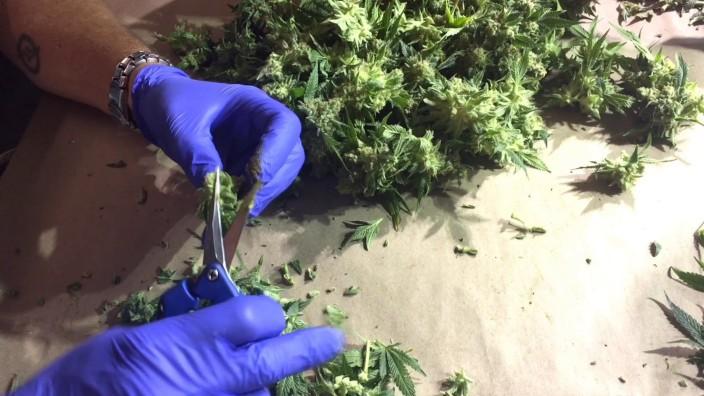 Cannabis-Branche in Colorado