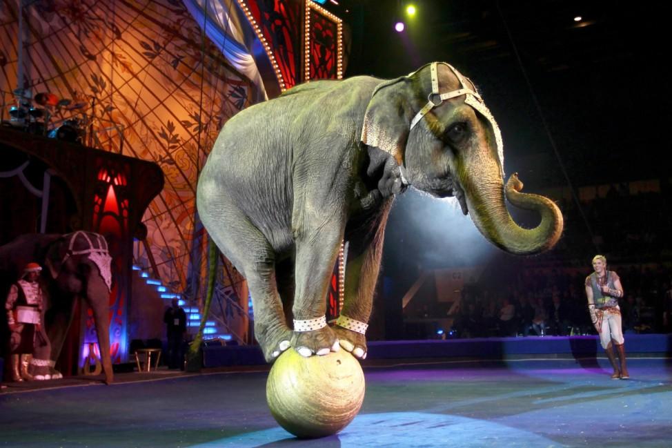 Zirkustiere - Elefant