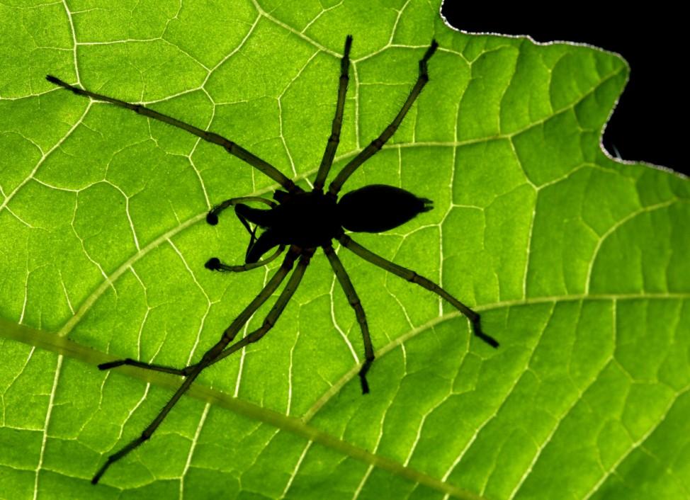 USA: Spinnen nisten sich in Mazdas ein - Rückruf