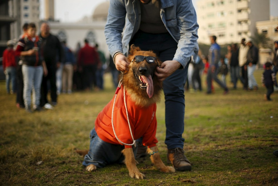 A Palestinian man shows his dog during dog show organized by local dogs breeders, in Gaza City