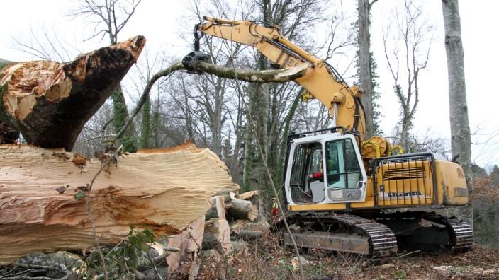 Forstarbeiten in der Pähler Schlucht